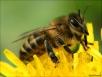 Пчеловодство накалькуляторе. Считаем