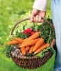 Таблица правильного соседства овощных культур
