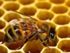 Пчеловод делится опытом (1часть)