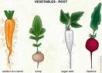 Корнеплоды нелюбят навоза