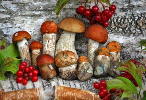 Как хранить белые грибы