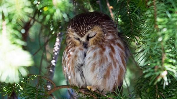 спящая птица