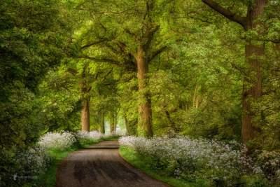Нидерландский фотограф покорил мир лесными пейзажами. Фото