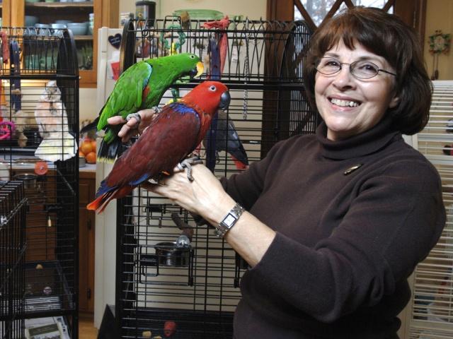 У большинства попугаев самки и самцы выглядят одинаково. Редкое исключение: у самцов благородного зелено-красного попугая изумрудно-зеленый окрас и ярко-оранжевый клюв, а самки малиново-синие с черным клювом. Их даже принимали за разные виды