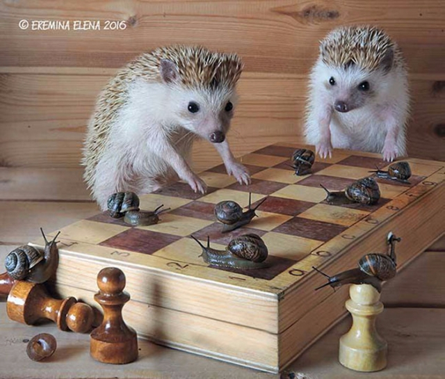 11. Шахматы (700x596, 467Kb)