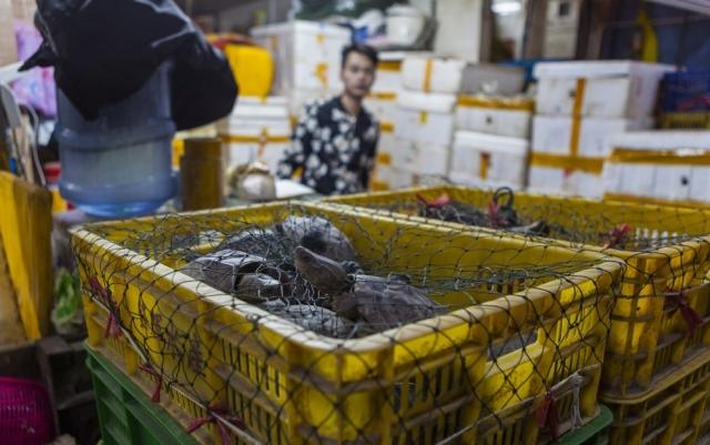 Фото: Вот так выглядит крупнейший китайский рынок морепродуктов (Фото)