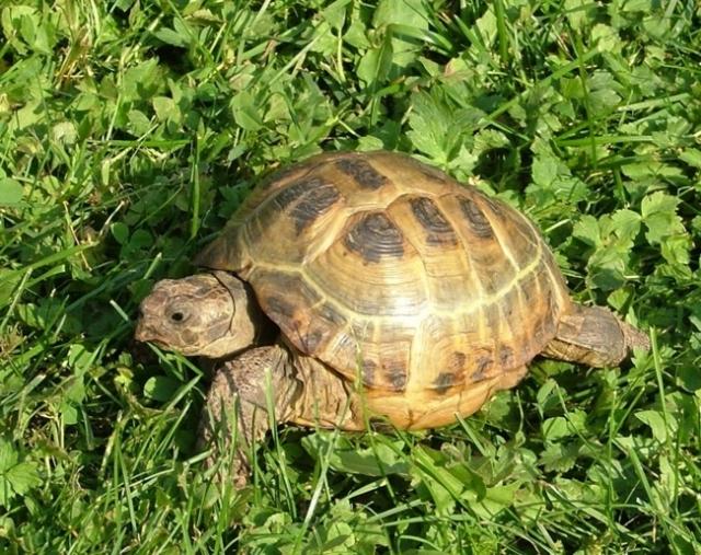 """Результат пошуку зображень за запитом """"Покатай меня, большая черепаха!"""""""