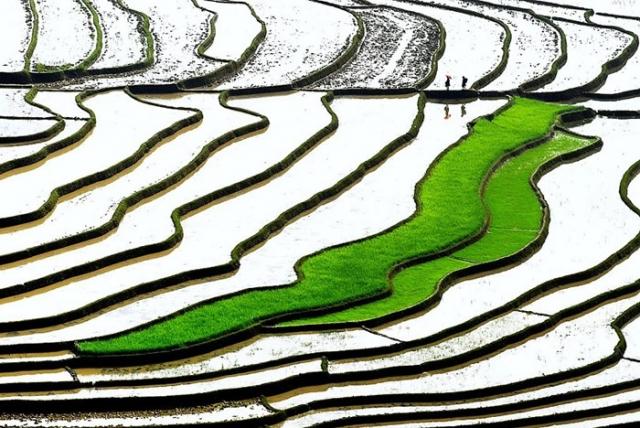 Абстракция. Автор: Ly Hoang Long.