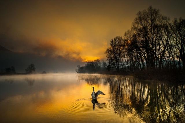 Лучшие фотографии природы фотоконкурса Siena International Photography Awards 2016 12