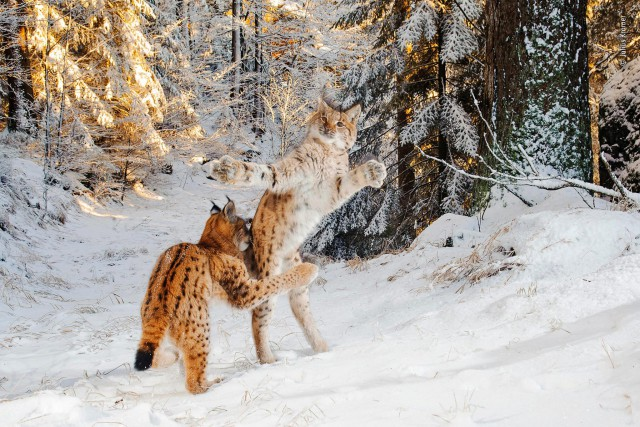Шорт-лист конкурса дикой природы Wildlife Photographer of the Year 2018