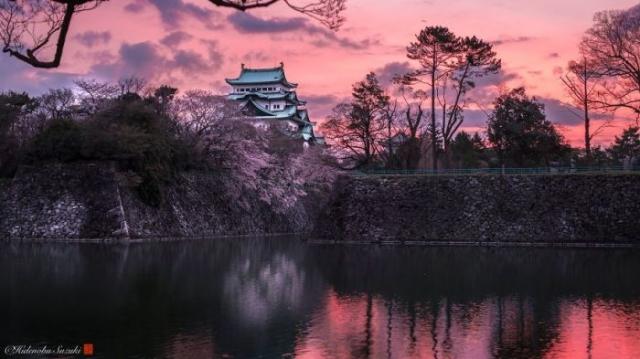 Великолепный замок на фоне восходящего солнца и цветущей сакуры.
