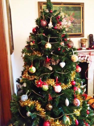 Чем красивее елка, чем больше на ней ярких игрушек и гирлянд, тем больше она манит твоего котяру. Помни об этом, когда будешь деревцо наряжать
