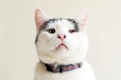 Слепые коты стали героями необычного фотопроекта. Фото