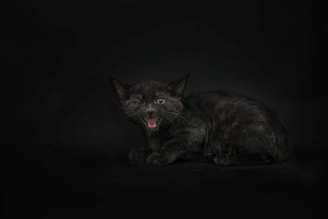 Чёрные кошки тоже хотят любви