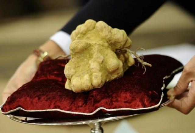 Фото: Как выглядит самая дорогая в мире еда (Фото)