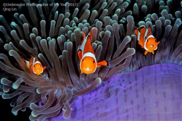 лучшее подводное фото