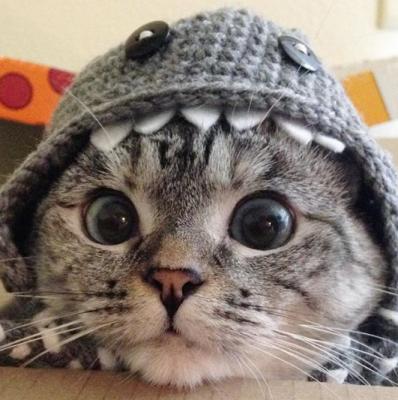 За этими котами следят миллионы людей в Instagram. Фото