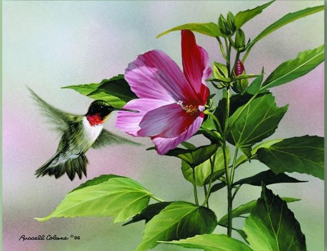 """Результат пошуку зображень за запитом """"Флора и фауна в ярких картинах Russell Cobane."""""""