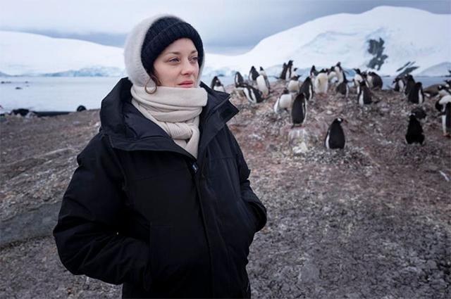 """Результат пошуку зображень за запитом """"В компании пингвинов. Марион Котийяр показала фото из поездки в Антарктиду с Greenpeace - фото."""""""