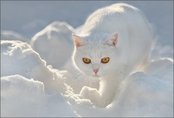 """Результат пошуку зображень за запитом """"кошек на белом снегу.анимации"""""""