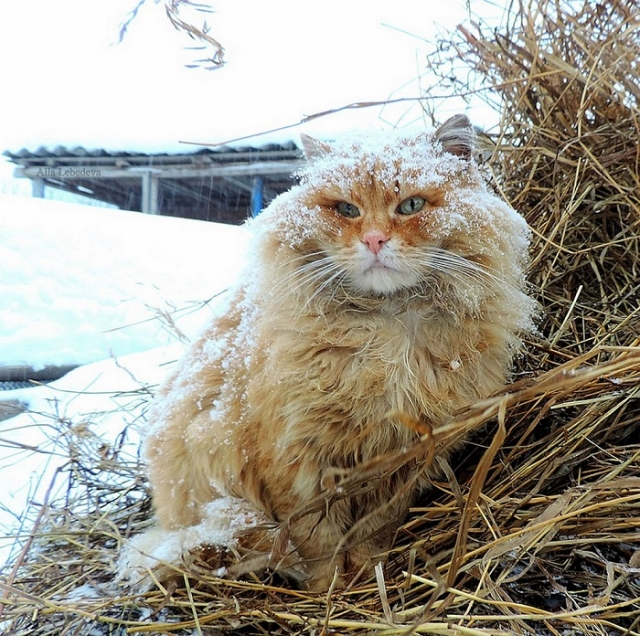 Точное количество проживающих представителей кошачьего семейства неизвестно даже хозяйке.