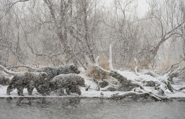 Красота природы на фотографиях Игоря Шпиленка