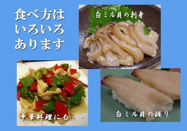 Особенно популярен этот моллюск у японских гурманов