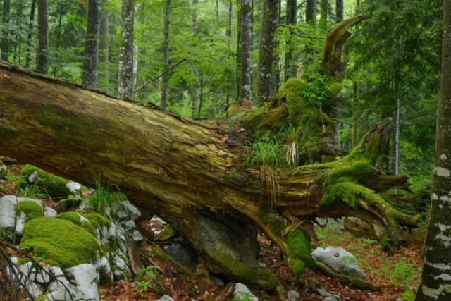 Девственные леса Европы от фотографа Маттиаса Шикхофера
