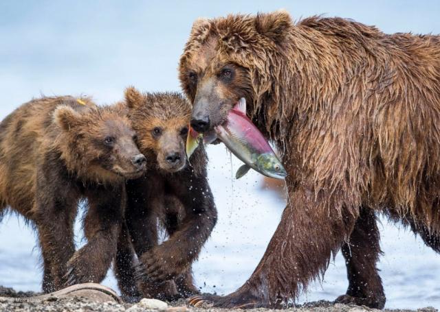 Победители конкурса фотографий дикой природы 2017
