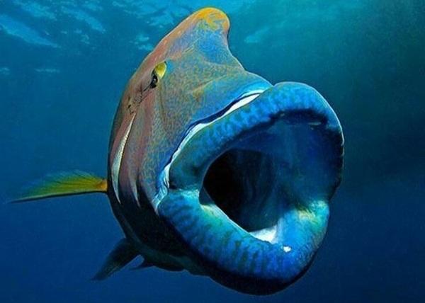 Рыбы-Красного-моря-Названия-описания-и-особенности-рыб-Красного-моря-5