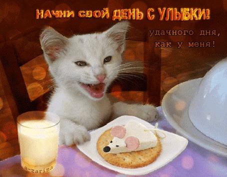 """Результат пошуку зображень за запитом """"анимации кошки веселые"""""""