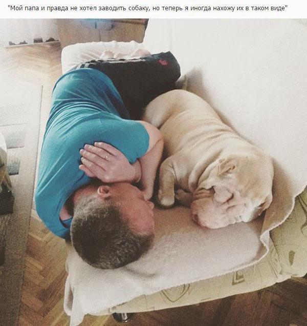 Отцы, которые были против собаки в доме