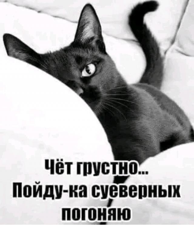 Результат пошуку зображень за запитом Черные котики что-то замышляют - фото.