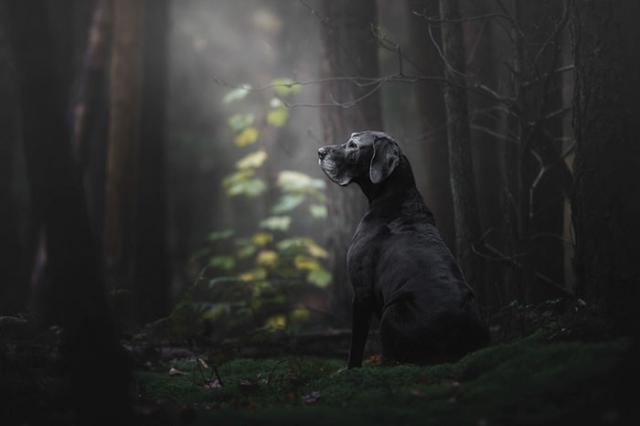 Леди загадочного леса.
