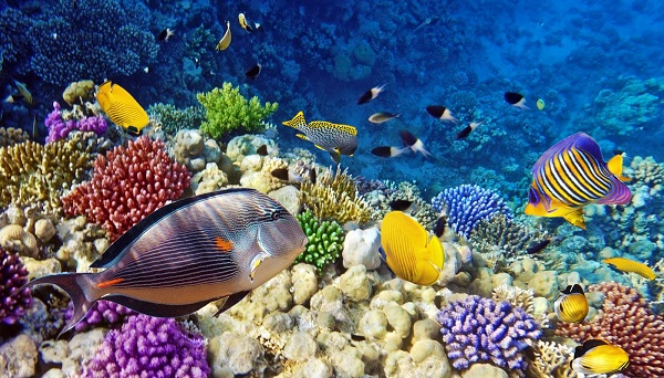 Рыбы-Красного-моря-Названия-описания-и-особенности-рыб-Красного-моря-1
