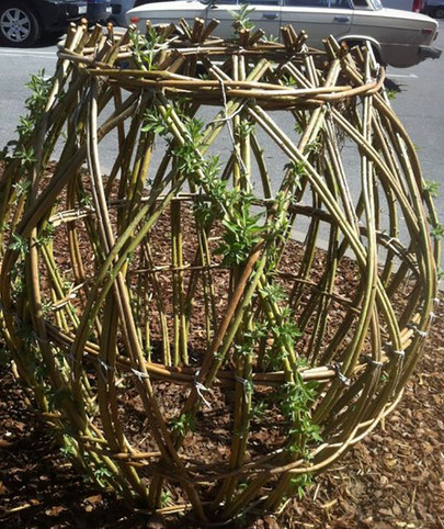 Сосед нарезал палочки вербы и подождал, пока они укоренятся, а затем начал творить… Лучшее решение для дачи!