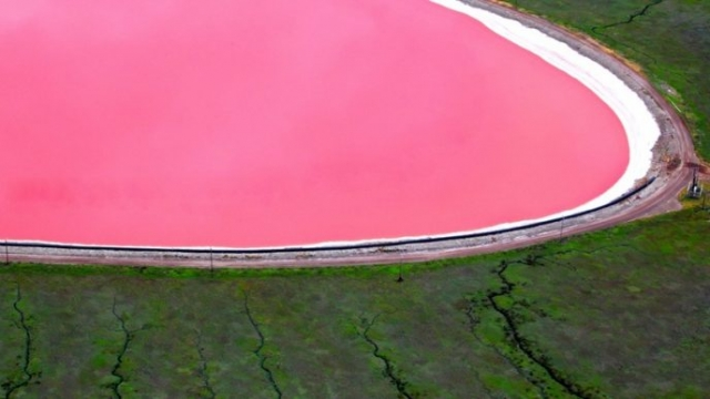 Своим розовым цветом озеро обязано галобактериям, способным жить в среде с высоким содержанием солей.