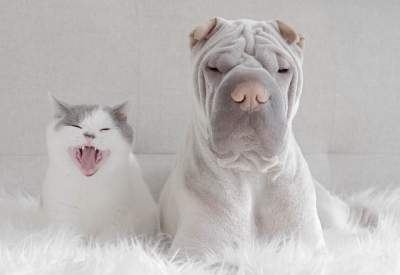 В Сети отыскали самую фотогеничную в мире собаку. Фото