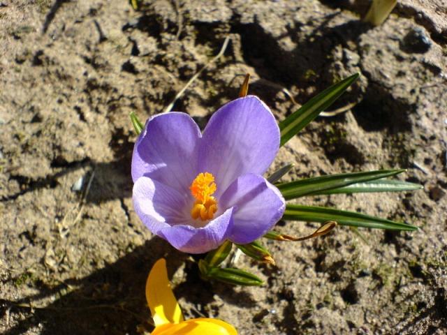 Весенние цветы (фото)