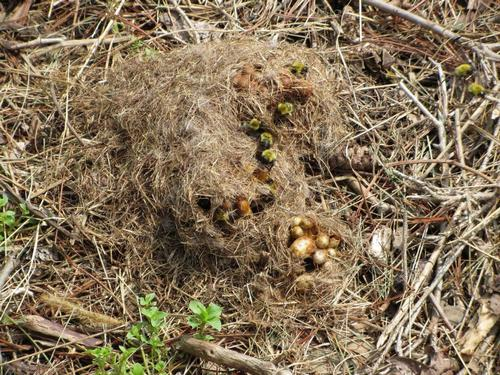 гнездо шмеля