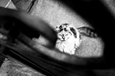 Сила взгляда: проникновенные портреты кошек от итальянского мастера. Фото