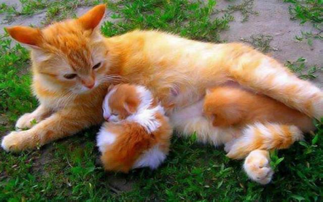 Обои - Кошки. Пушистые и грациозные