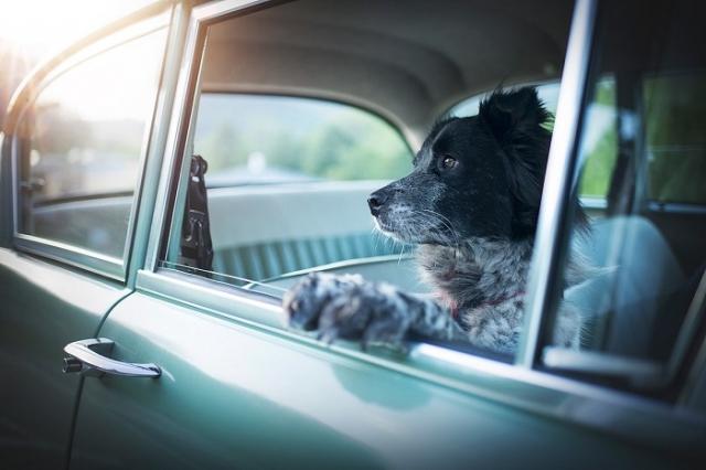 Хорошая фотография должна что-то рассказать о собаке, показать ее природную и душевную красоту.