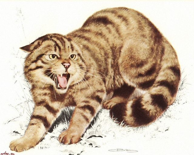 """Результат пошуку зображень за запитом """"Рисованные обои. Животные. Carl Brenders."""""""
