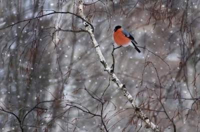 Животные в очаровательных «зимних» снимках. Фото