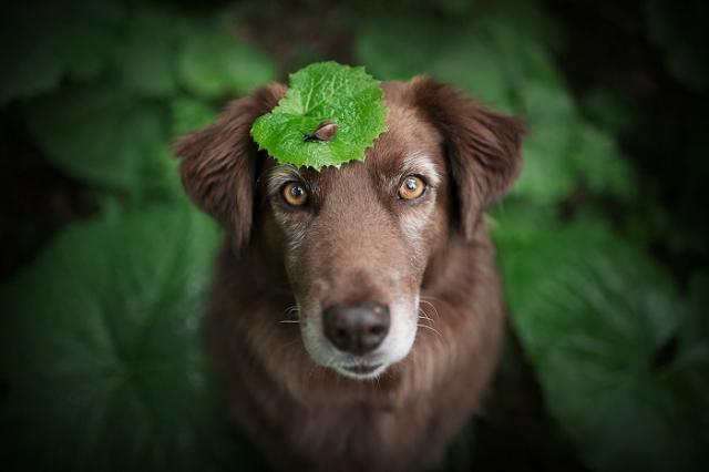 Энн Гейер начала фотографировать собак более 10 лет назад и за это время приобрела богатый опыт.