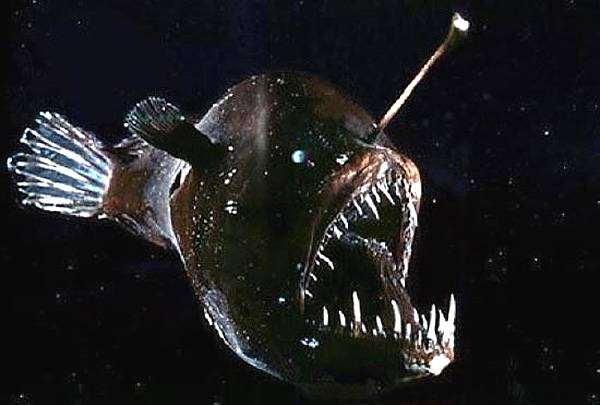 Морской черт (Lophius piscatorius), фото виды рыб фотография