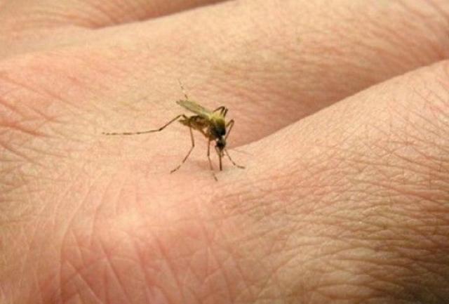 Натуральное средство от комаров.