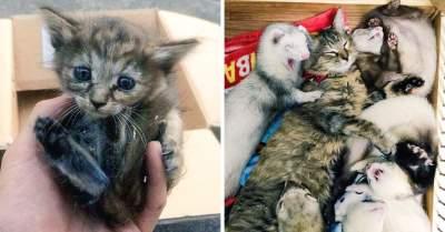 Животные из приюта, нашедшие свои дома навсегда. Фото