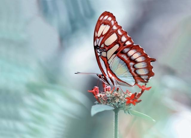 Неописуемая красота: завораживающие снимки прекрасных бабочек (Фото)
